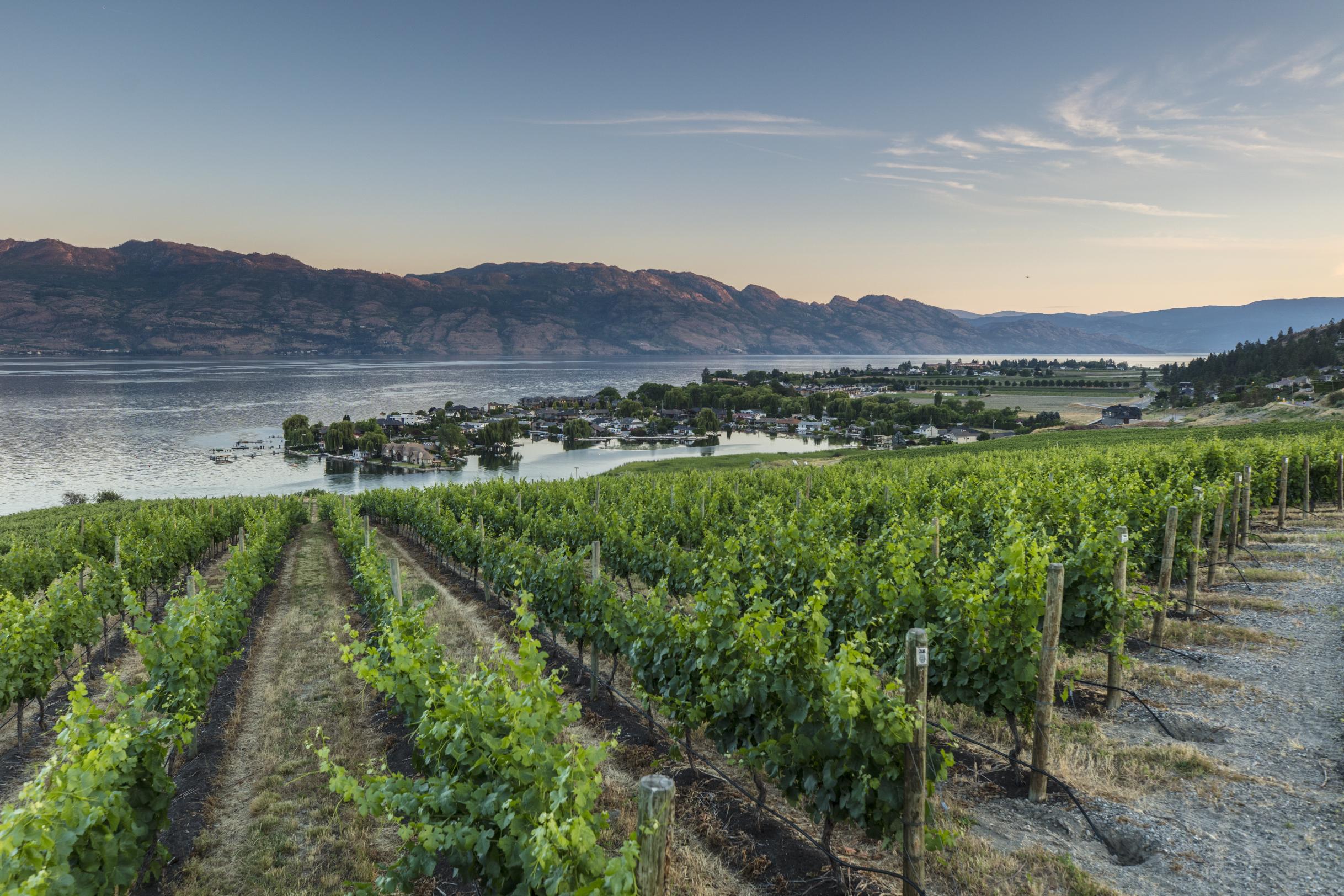 West Kelowna Vineyards
